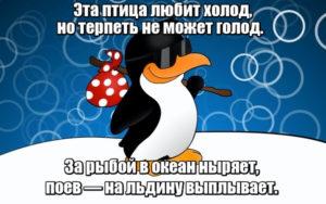 Эта птица любит холод, но терпеть не может голод. За рыбой в океан ныряет, поев — на льдину выплывает. Пингвин.