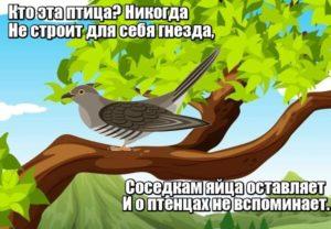Кто эта птица? Никогда не строит для себя гнезда, соседкам яйца оставляет и о птенцах не вспоминает. Кукушка.