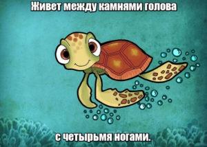 Живет между камнями голова с четырьмя ногами. Черепаха.