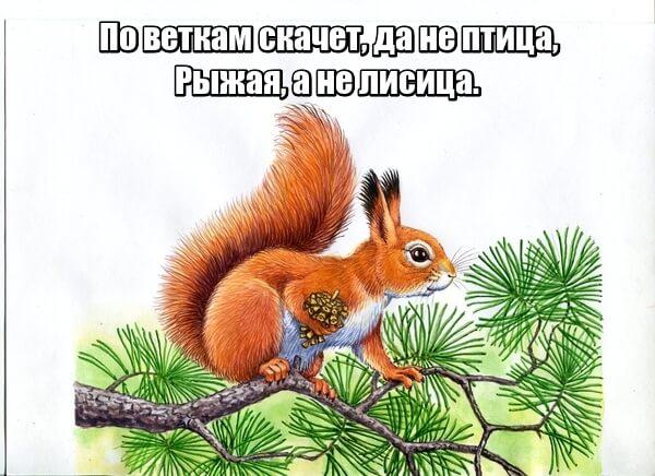 По веткам скачет, да не птица, Рыжая, а не лисица.