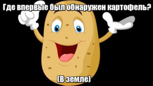 Где впервые был обнаружен картофель? В земле.