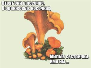 Стоят они в лесочке, В оранжевых носочках, Милые сестрички, Имя им … Лисички.
