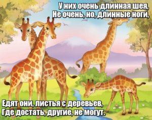 У них очень длинная шея, Не очень, но, длинные ноги, Едят они, листья с деревьев, Где достать, другие, не могут. Жирафы.