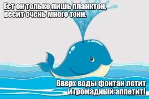 Ест он только лишь планктон, весит очень много тонн. Вверх воды фонтан летит и громадный аппетит! Кит.