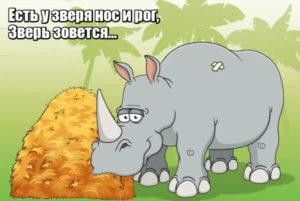 Есть у зверя нос и рог, Зверь зовется… Носорог.