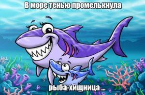В море тенью промелькнула рыба-хищница ... Акула.