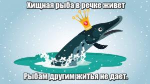 Хищная рыба в речке живет. Рыбам другим житья не дает. Щука.