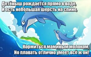 Детёныш рождается прямо в воде, И есть небольшая шерсть на спине, Кормиться маминым молоком, Но плавать отлично умеет всё ж он! Дельфин.