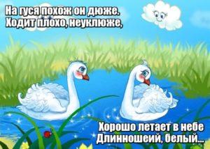 На гуся похож он дюже. Ходит плохо, неуклюже, Хорошо летает в небе Длинношеий, белый... Лебедь.