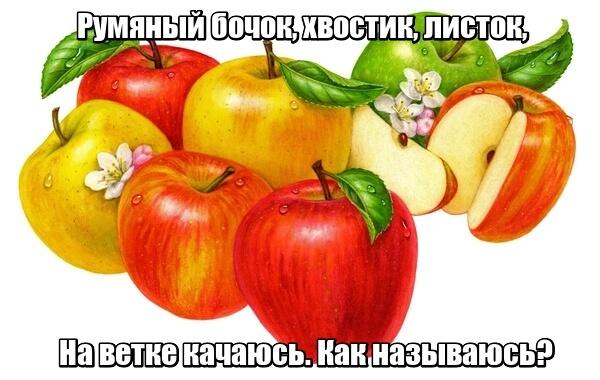 Румяный бочок, Хвостик, листок, На ветке качаюсь, Как называюсь? Яблоко.