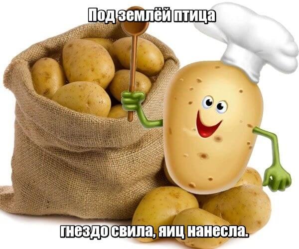 Под землёй птица гнездо свила, яиц нанесла. Картофель.