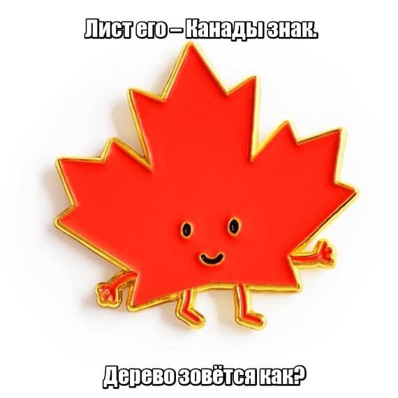 Лист его – Канады знак. Дерево зовётся как? Клён
