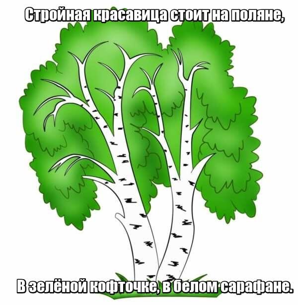 Стройная красавица стоит на поляне, В зелёной кофточке, в белом сарафане. Береза