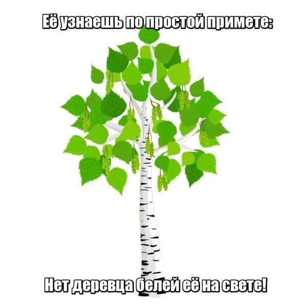 Её узнаешь по простой примете: Нет деревца белей её на свете! Береза