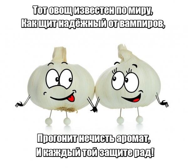 Тот овощ известен по миру, Как щит надёжный от вампиров, Прогонит нечисть аромат, И каждый той защите рад! Чеснок.