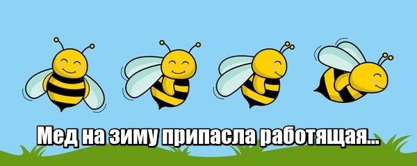 Мед на зиму припасла работящая. Пчела.