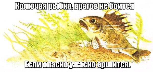 Колючая рыбка Врагов не боится. Если опасно ужасно ершится. Ерш.