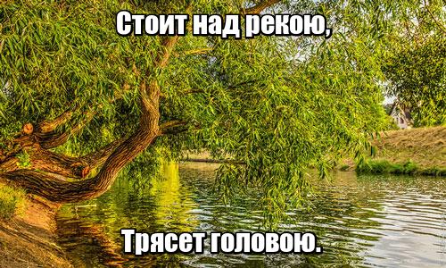 Стоит над рекою, Трясет головою. Ива.