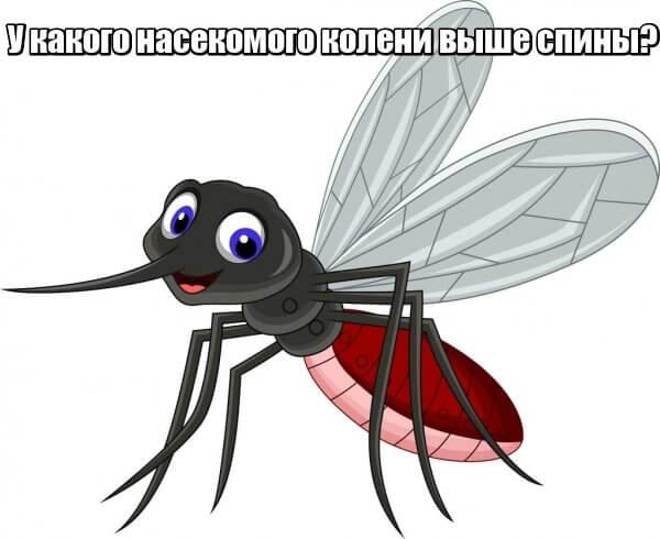 У какого насекомого колени выше спины? Комар.