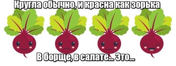 Кругла обычно, и красна как зорька В борще, в салате… Это… Свекла.