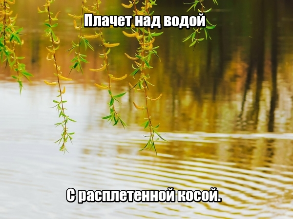 Плачет над водой С расплетенной косой. Ива.