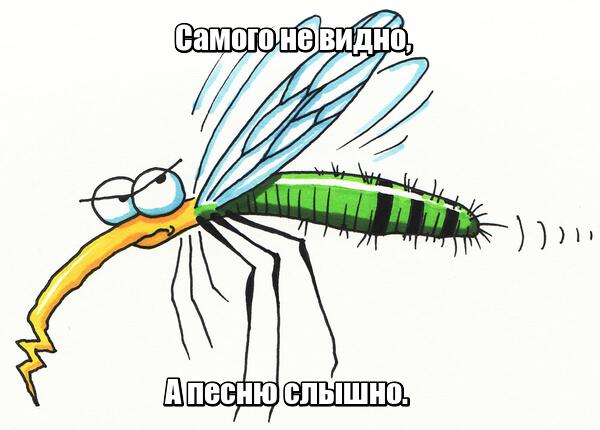 Самого не видно, А песню слышно. Комар.