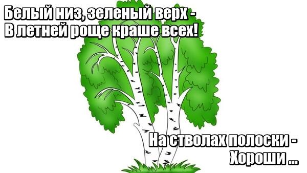 Белый низ, зеленый верх — В летней роще краше всех! На стволах полоски - Хороши ... Березки.