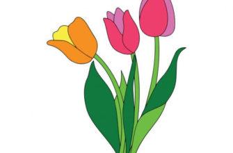 Тюльпаны. Загадки для детей про тюльпаны.