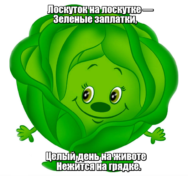 Лоскуток на лоскутке - Зеленые заплатки, Целый день на животе Нежится на грядке. Капуста