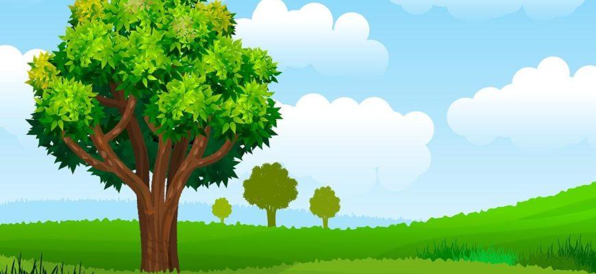 Дерево. Как выучить с ребенком виды деревьев.
