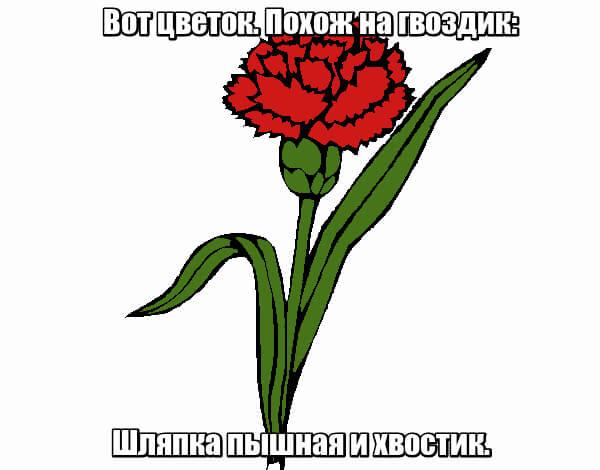 Вот цветок. Похож на гвоздик: Шляпка пышная и хвостик. Гвоздика.