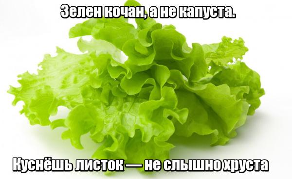 Зелен кочан, а не капуста. Куснёшь листок — не слышно хруста. Салат.