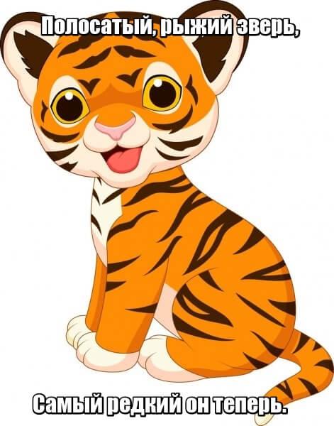 Полосатый, рыжий зверь, Самый редкий он теперь. Тигр.