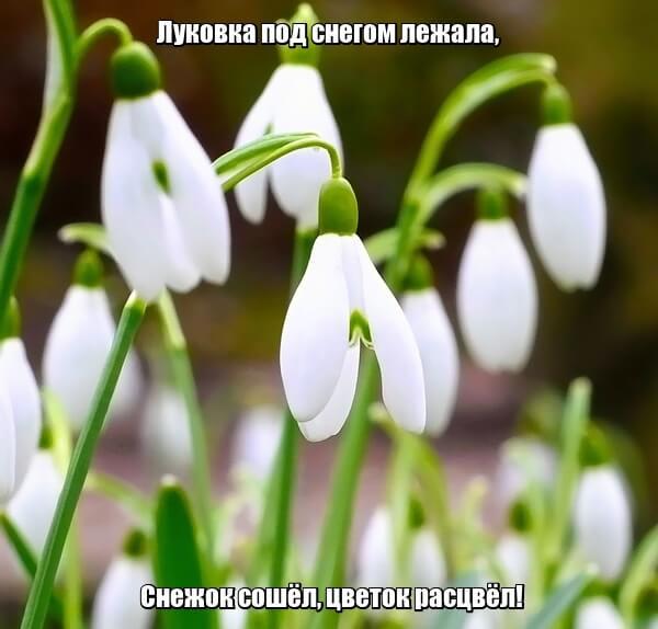 Луковка под снегом лежала, Снежок сошёл, цветок расцвёл! Подснежник.