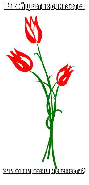 Какой цветок считается символом весны и свежести? Тюльпан.