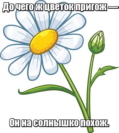 До чего ж цветок пригож — Он на солнышко похож. Ромашка.
