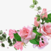 Роза. Загадки для детей про розу.