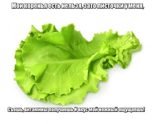 Мои коренья есть нельзя, За то листочки у меня, Съешь, витамины получаешь И вкус мой нежный ощущаешь! Салат.