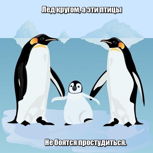 Лед кругом, а эти птицы Не боятся простудиться. Пингвин.