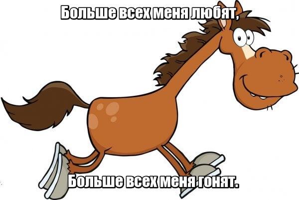 Больше всех меня любят, Больше всех меня гонят. Лошадь