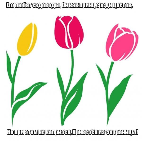 Его любят садоводы, Он как принц среди цветов, Но при этом не капризен, Привезён из-за границы! Тюльпан.