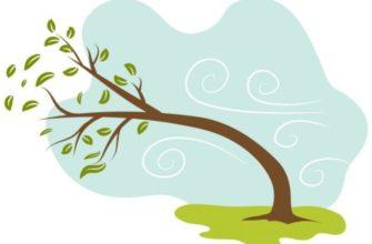 Дерево нагнулось от ветерка. Какие загадки помогут узнать новое про ветер.