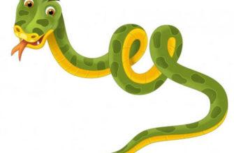 Змея. Как обьяснить ребенку что такое змея.