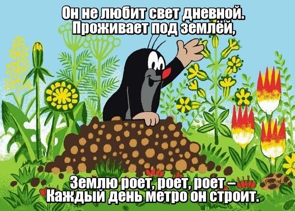 Он не любит свет дневной. Проживает под землёй, Землю роет, роет, роет – Каждый день метро он строит. Крот