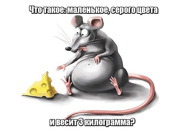 Что такое: маленькое, серого цвета и весит 3 килограмма? Мышь, у которой проблемы с весом