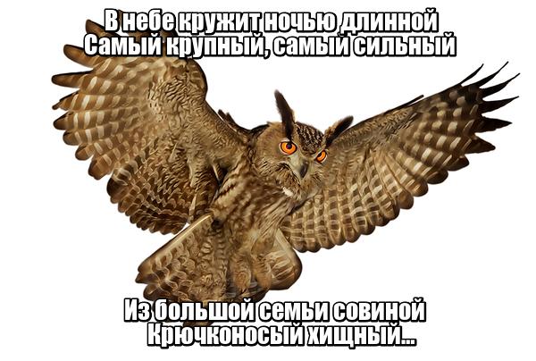 В небе кружит ночью длинной Самый крупный, самый сильный Из большой семьи совиной Крючконосый хищный…Филин