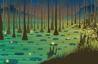 Болот. Где найти интересные загадки про болото для детей.