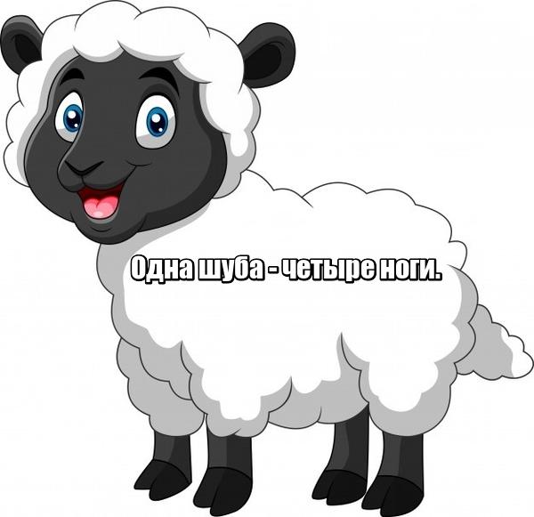 Одна шуба - четыре ноги. Овца.