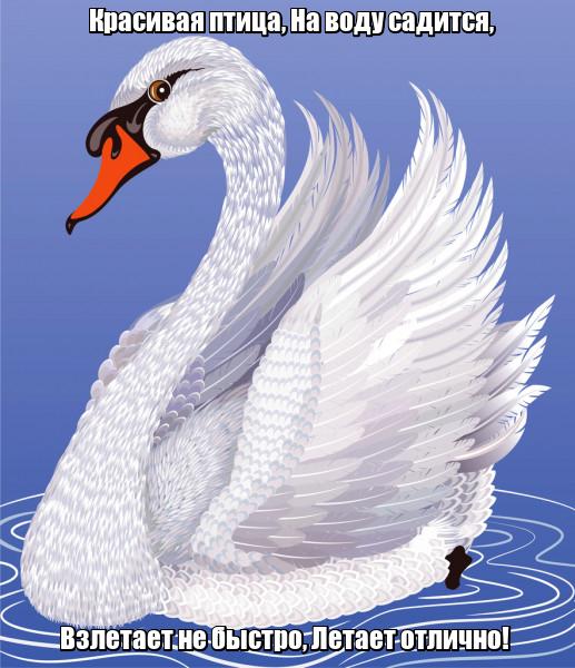 Красивая птица, На воду садится, Взлетает не быстро, Летает отлично! Лебедь.