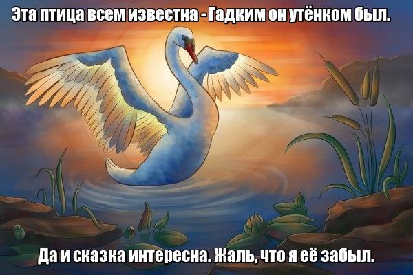 Эта птица всем известна - Гадким он утёнком был. Да и сказка интересна. Жаль, что я её забыл. Лебедь.
